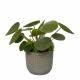 Plante anti morosité