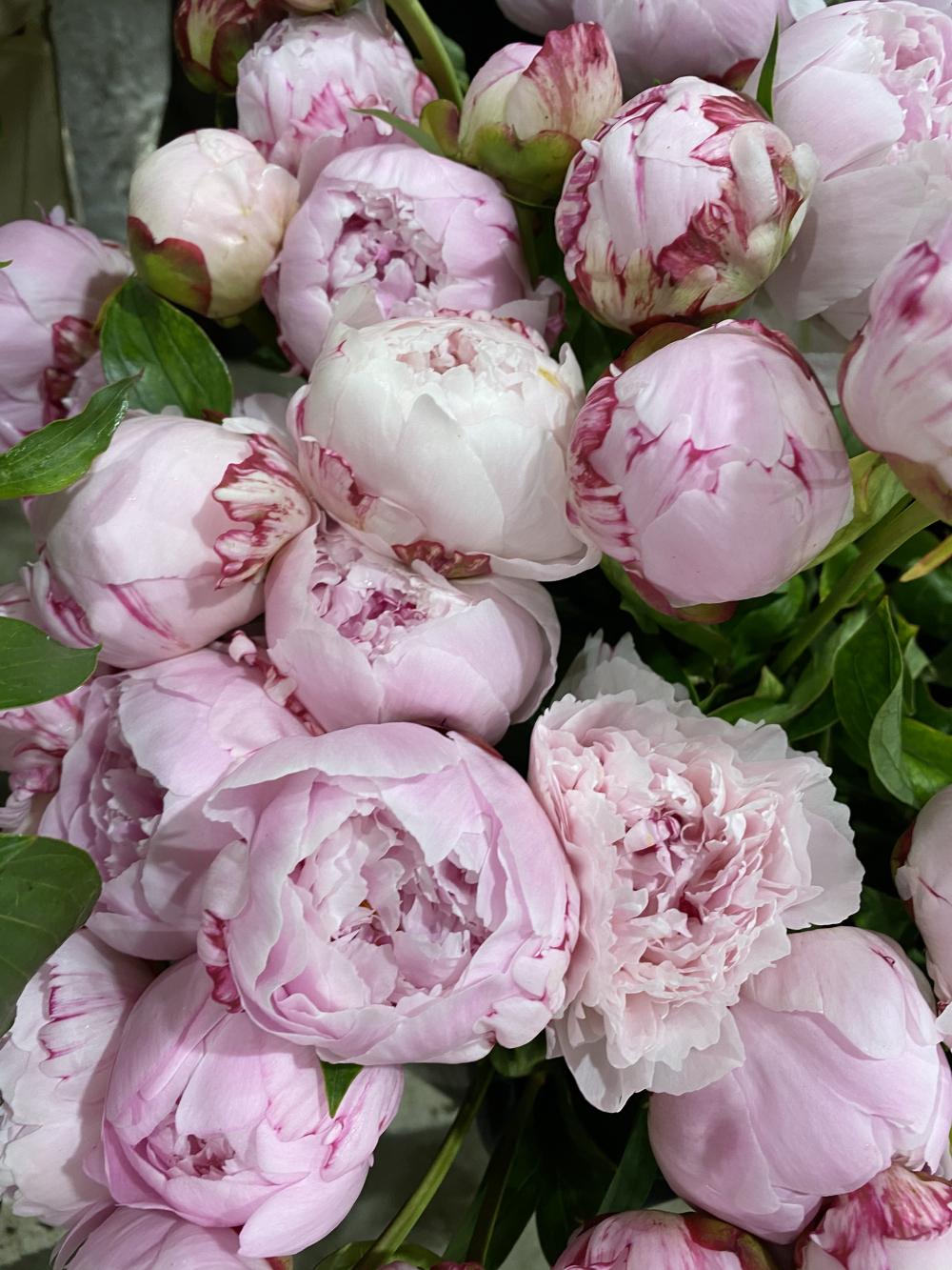 Bouquet de 7 pivoines rose ( Sarah Bernhardt )